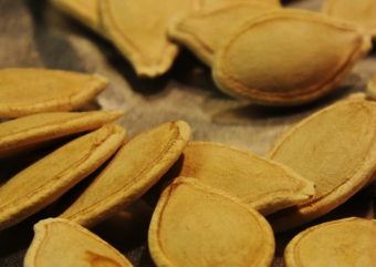 A few of these sugar pumpkin seeds saved from last fall will likely become next fall's pie or stout homebrew.