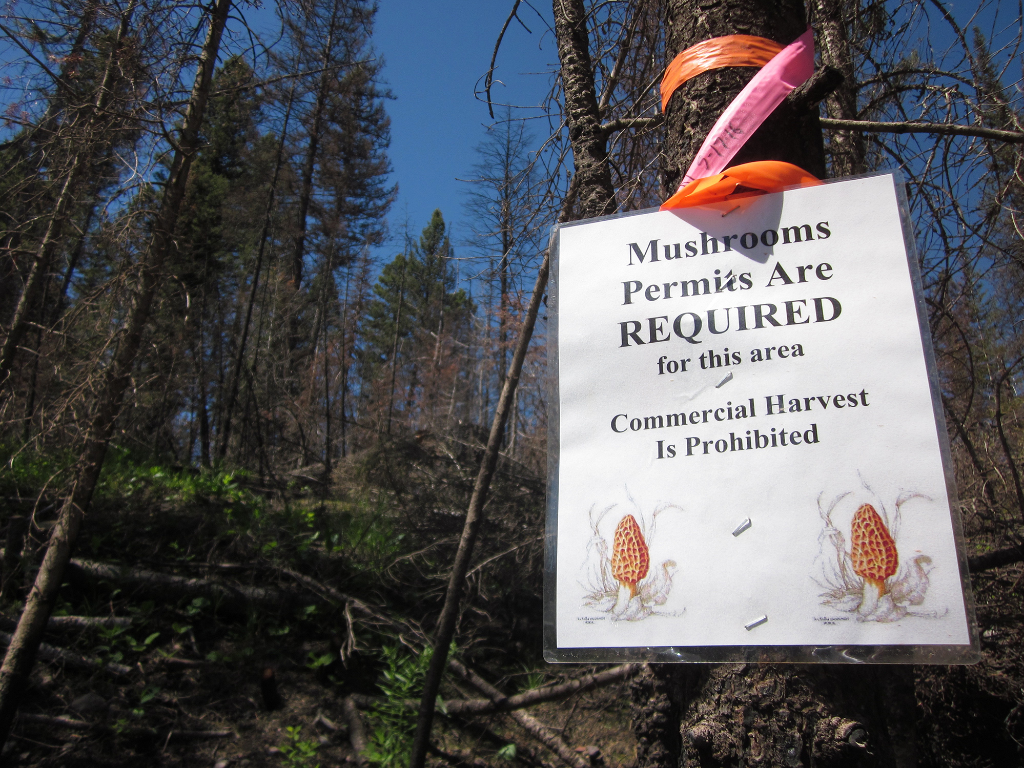 This year the U.S. Forest Service is only issuing personal-use permits in Montana's national forests.