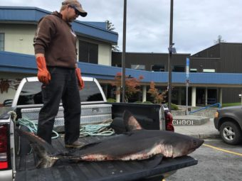 Joe Willis caught the salmon shark while gill netting (Photo by Abbey Collins/KFSK)