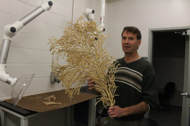 Bob Stone holds a 50 year old red tree coral. (Photo by Elizabeth Jenkins/KTOO)