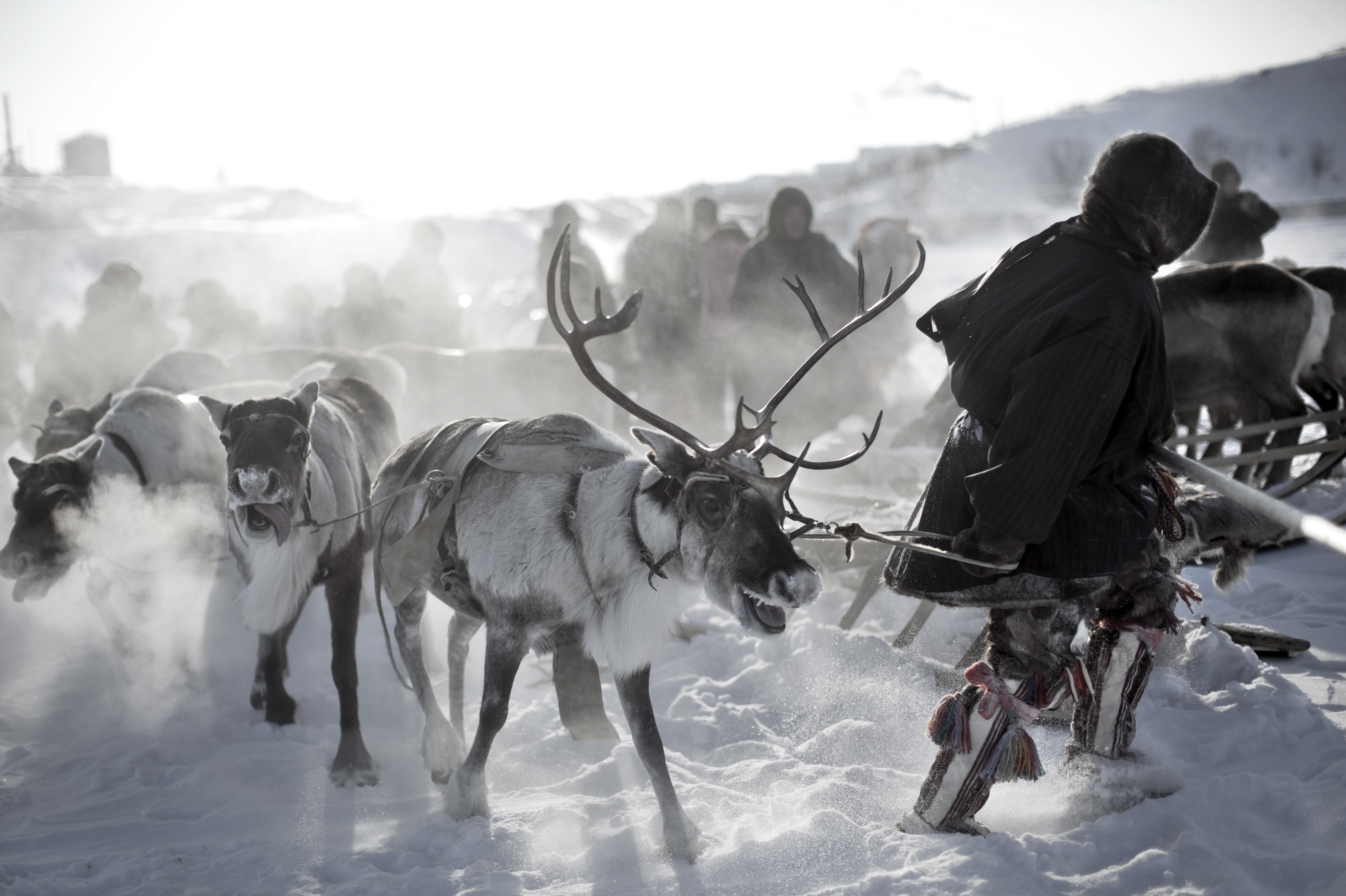 Nenet men hold a reindeer race. Photo by PW PIX/Getty Images)