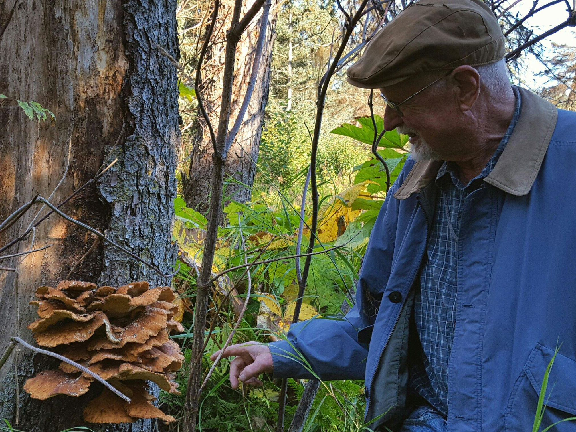 Neil McArthur points out a sulfur shelf mushroom in Homer. (Photo by Shahla Farzan/KBBI)