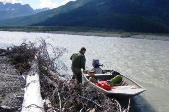 A state Department of Fish and Game staffer works on sampling fish for a study on toxic metal concentrations in Tulsequah and Taku river fish. (Photo courtesy Department of Fish and Game)