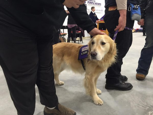 National service dog nonprofit helps fairbanks veterans - Interior community health center fairbanks ...