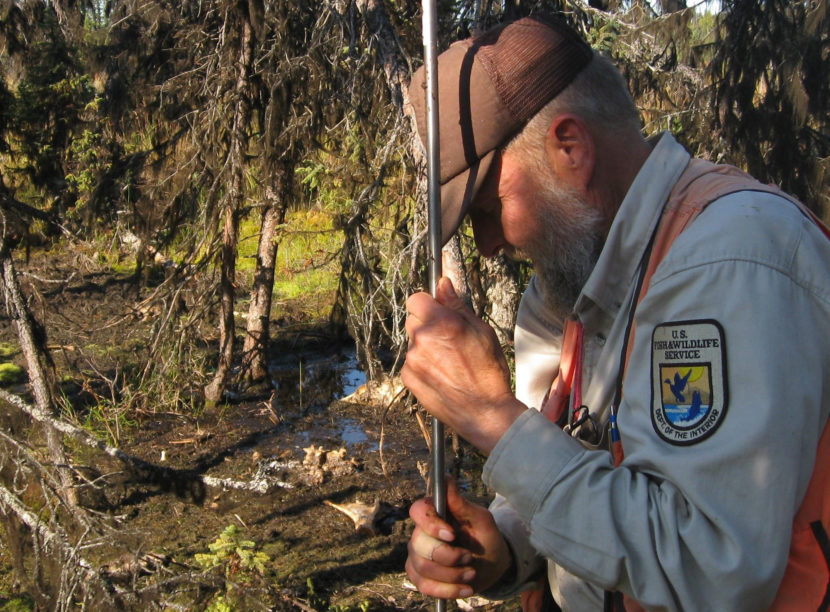 Retired U.S. Fish and Wildlife researcher Ed Berg probes for permafrost on the Kenai Peninsula. (Photo by U.S. Geological Survey)