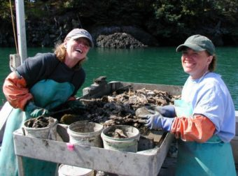 Brenda Bryan, left, and Jackie Whitmore clean shellfish at the Moss Island Oyster Farm in Peterson Bay, across from Homer. (Photo by Ron Bader, Moss Island Oyster Farm)