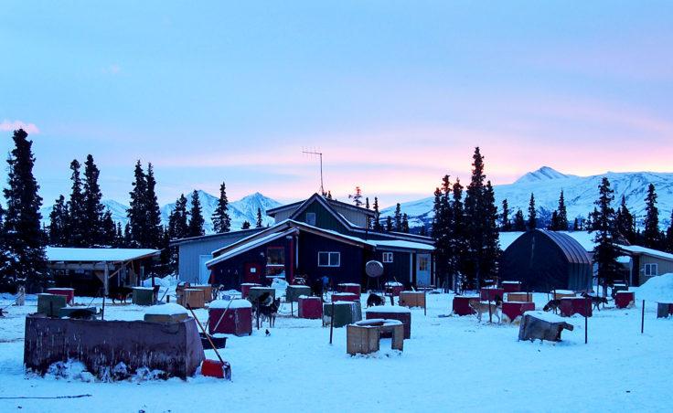 The view of the dog lot at Husky Homestead outside Denali on January 26, 2017 (Photo by Zachariah Hughes/Alaska Public Media)