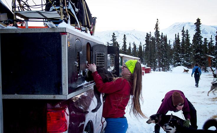Tara Cicatello and Sean Underwood load sled-dogs into a truck for transport to a race on the Kenai Peninsula. (Photo by Zachariah Hughes/Alaska Public Media)