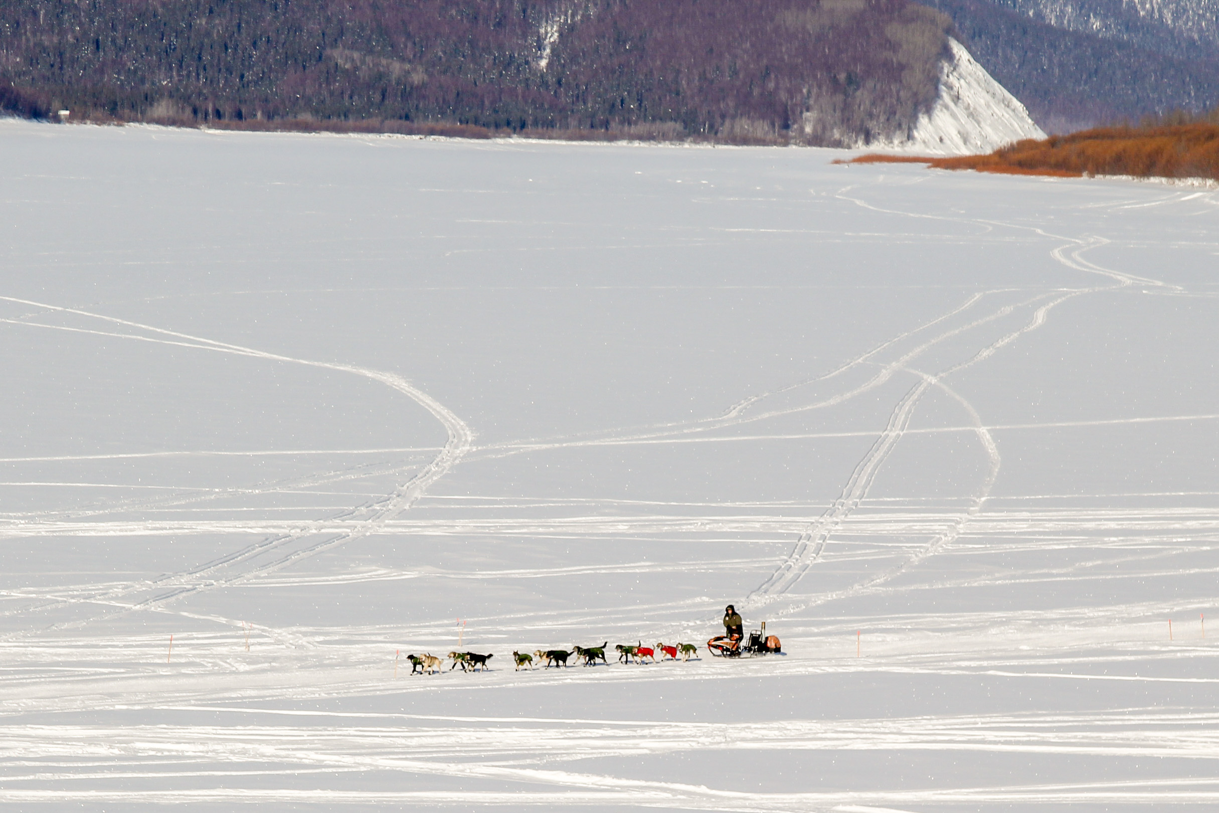 300 miles to nome race dynamics change as iditarod moves to the coast