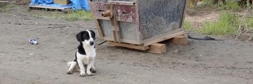 A dog in Kwethluk. (Film Academy Students / Lower Kuskokwim School District)