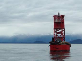 Sea lions nap on a buoy in Frederick sound. (Photo by Nora Saks/KFSK)