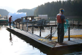 Tutka Bay Lagoon Hatchery. Photo courtesy Cook Inlet Aquaculture Association.)