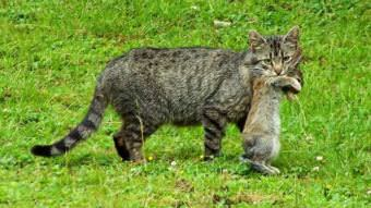 Fish and Game experts say pet owners shouldn't allow cats and dogs to eat hares, voles and other small mammals that could contract tularemia. Pets that show any symptoms of the disease should be examined and treated as soon as possible, the experts say. (KUAC file photo)