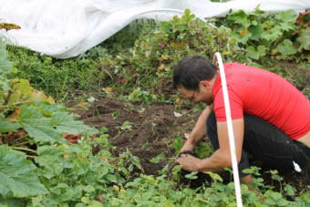 David Parrish weeds his plot at C Street Community Gardens. (Photo by Henry Leasia/Alaska Public Media)