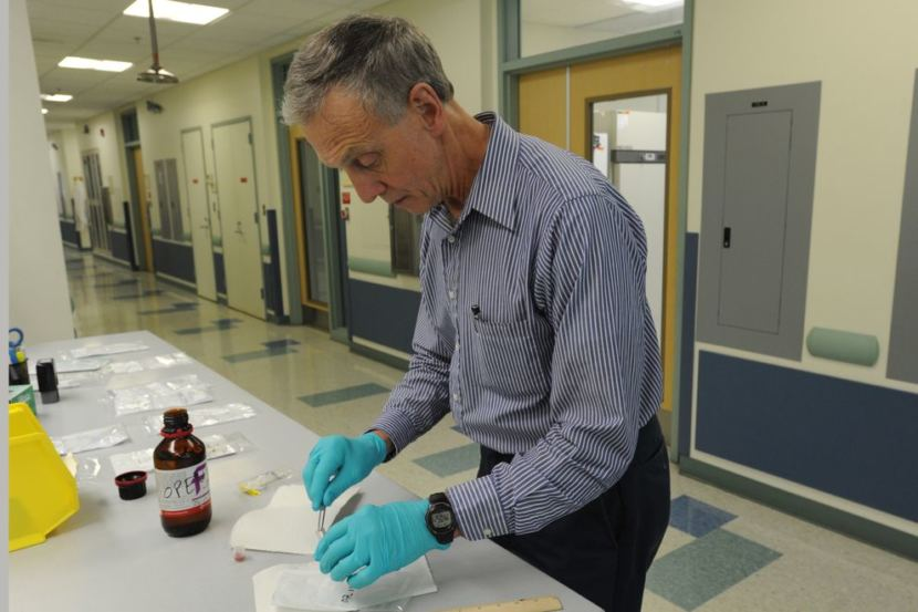 State veterinarian Bob Gerlach looks at one of the ticks found in Alaska and sent into his office. (Photo by Bill Roth/ADN)