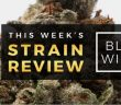 black_window_marijuana_strain_review