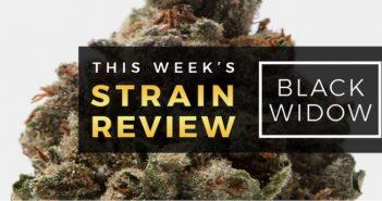 black_window_marijuana_strain_review