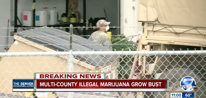 dea-colorado-massive-bust-illegal-grows