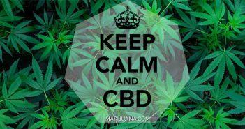 cbd for thc overdose