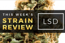 LSD Marijuana Strain Review