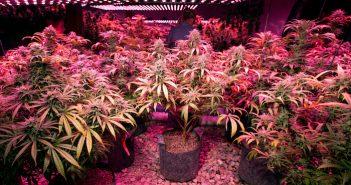 Utah Gov. signs cannabinoid research act legislation