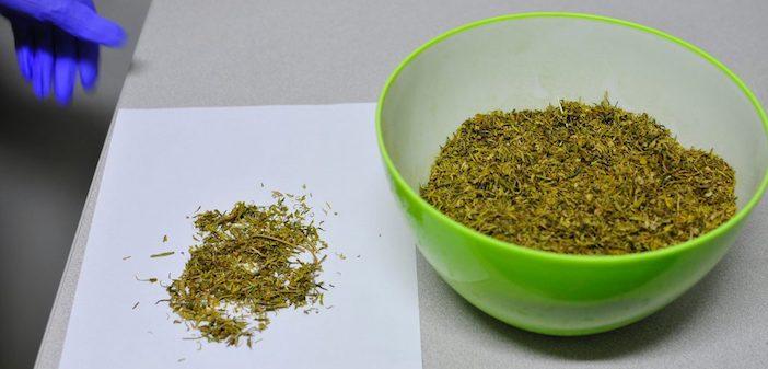 crap-weed-2