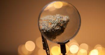 marijuana-com-36