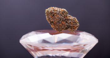marijuana-stock-success