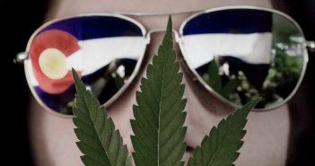 Portrait of a Colorado medical marijuana cultivator.