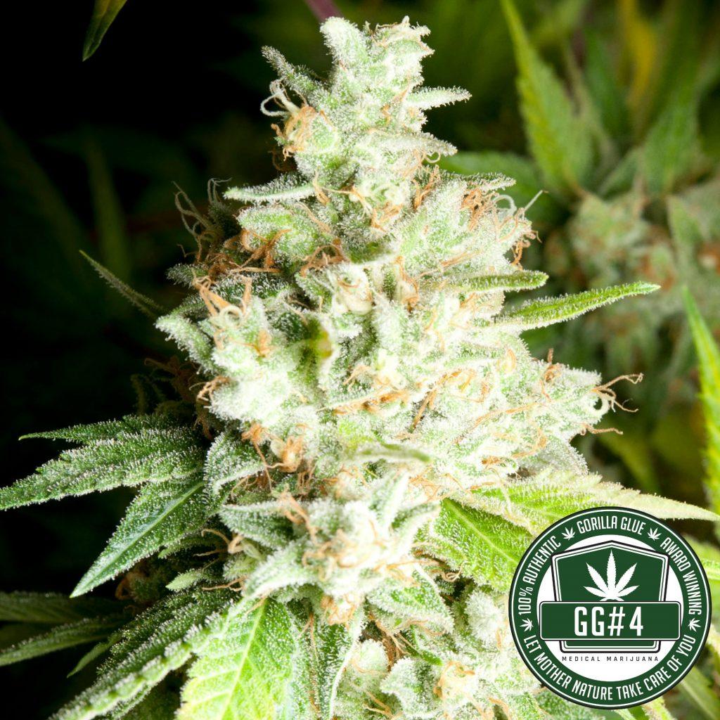 A Marijuana Strain Has Finally Been Trademarked  Pretty-2-1024x1024