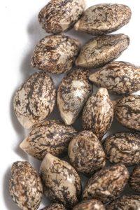 seeds_1744-2