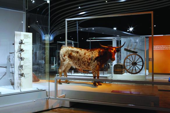 ¿Qué tiene que ver una vaca con la historia de L.A.? Vaya y descúbralo en el NHM. Foto: Museo Nacional de Historia del condado de Los Ángeles.