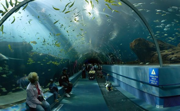 Se espera que el proyecto permita ver el fondo del mar como en el túnel de tiburones del Acuario de Georgia. Foto: Wikimedia Commons.