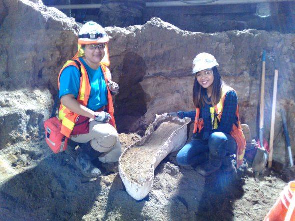 Trabajadores de Cogstone con los fósiles que descubrieron.