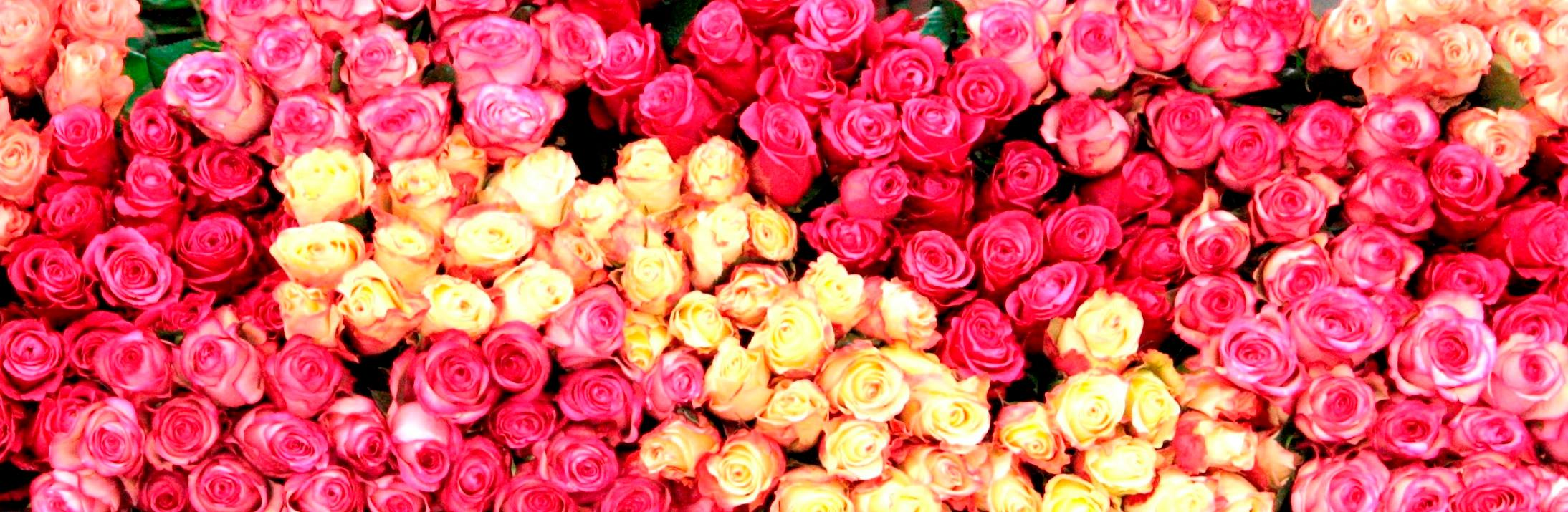 Roses! Photo from LA Original Flower Market Facebook