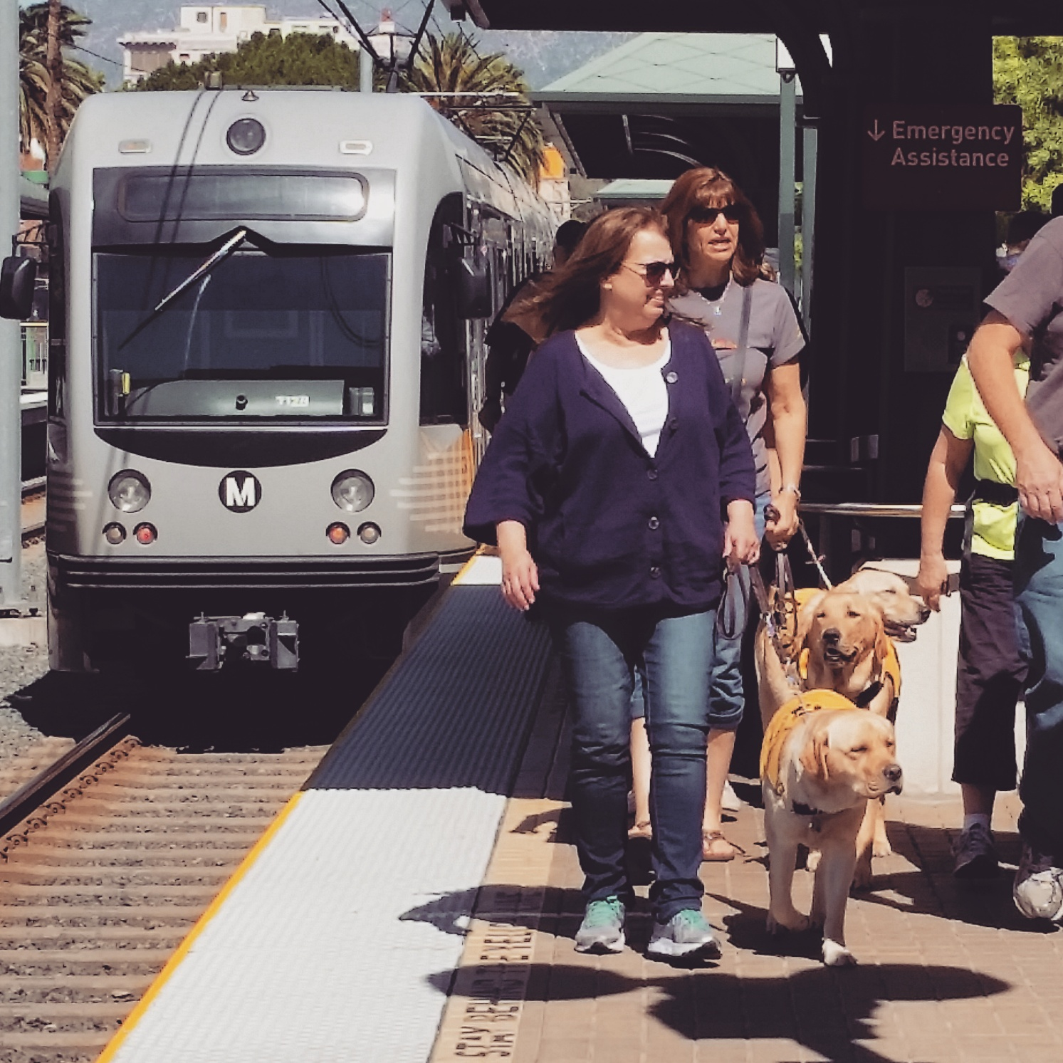 ART OF TRANSIT: Guide dogs on a training day on the Gold Line in Pasadena.