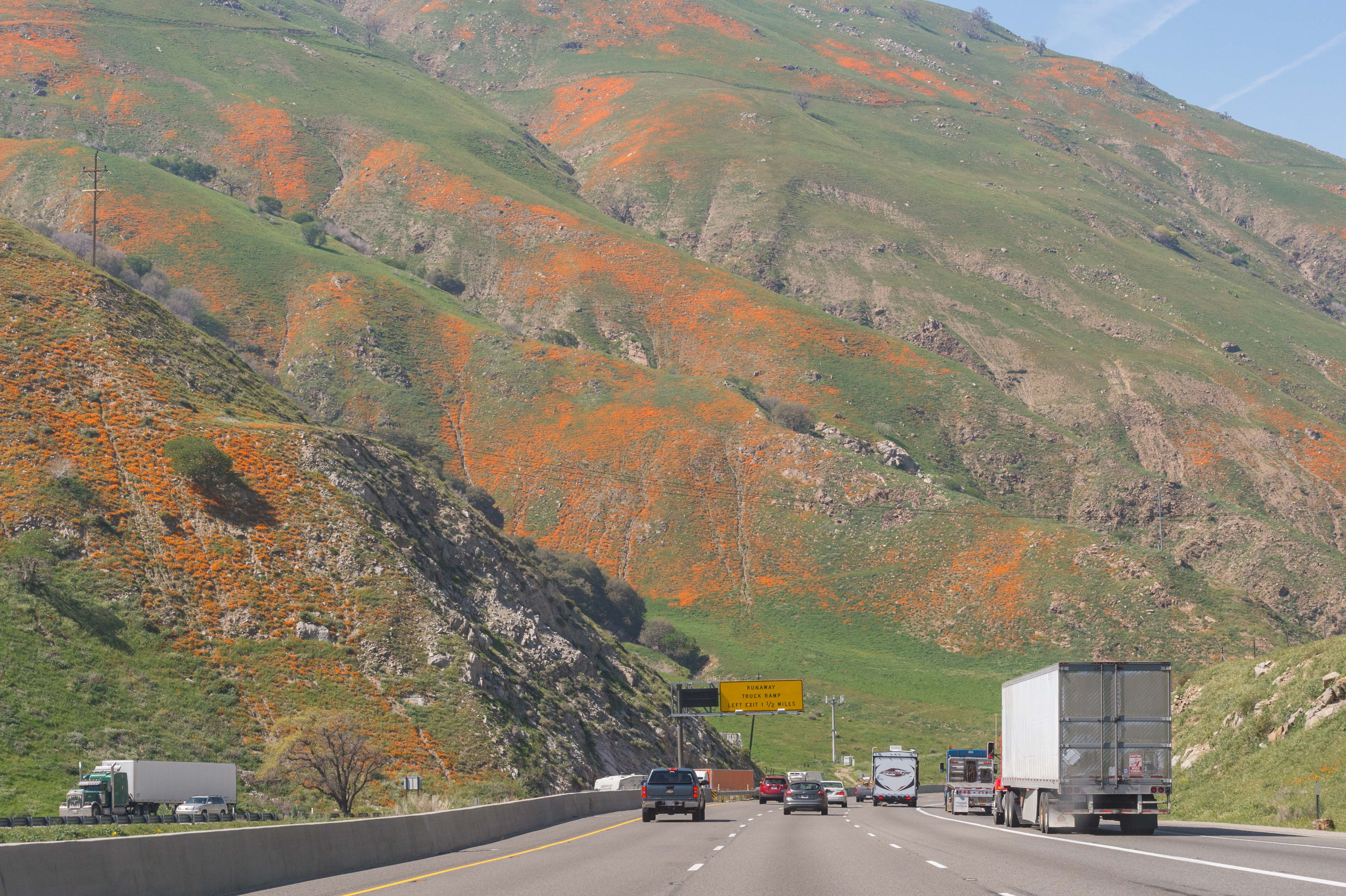 The California poppies are blooming along the Golden State Freeway in the Tejon Pass thanks to El Nino Lite. Photo by Steve Hymon.