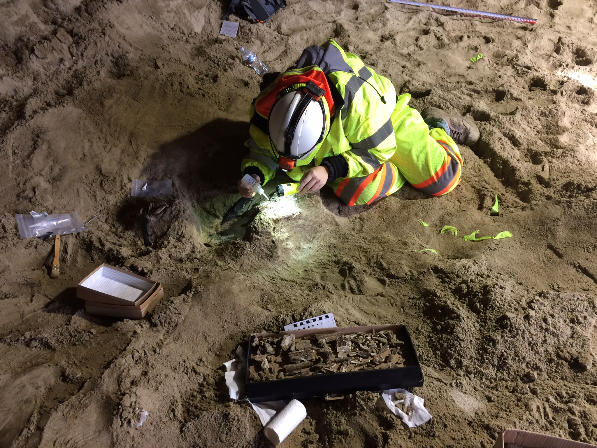img_20161123_paleontologistdr-ashleylegerpreparingtuskforremoval