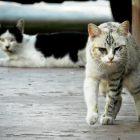 Having a heart for homeless cats