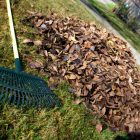 Managing yard waste