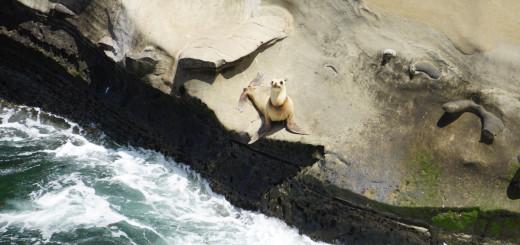 Seal-Far
