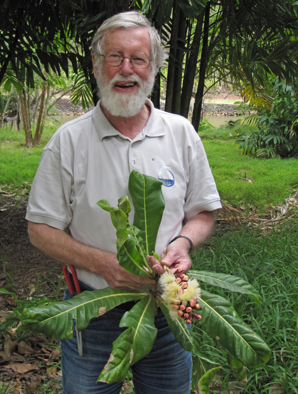 Barringtonia procera   - Sir Ghillean (Iain) T. Prance with flowering branch