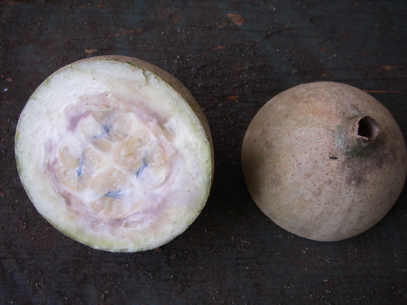 Genipa americana   - Whole and dissected fruit