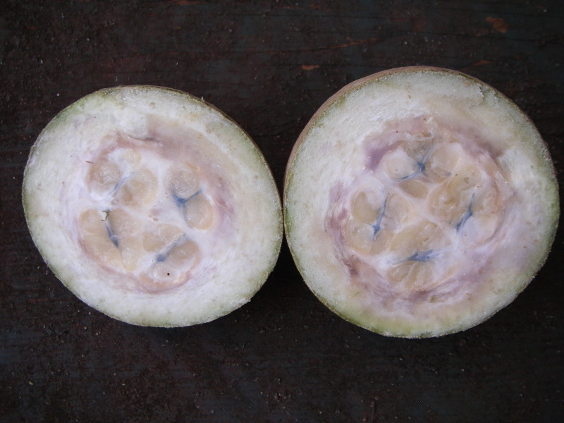 Genipa americana   - Fruit dissected