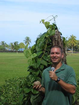 Ipomoea batatas   - Kamaui Aiona, Director of the Kahanu Garden of the NTBG speaking about Ipomea batatas