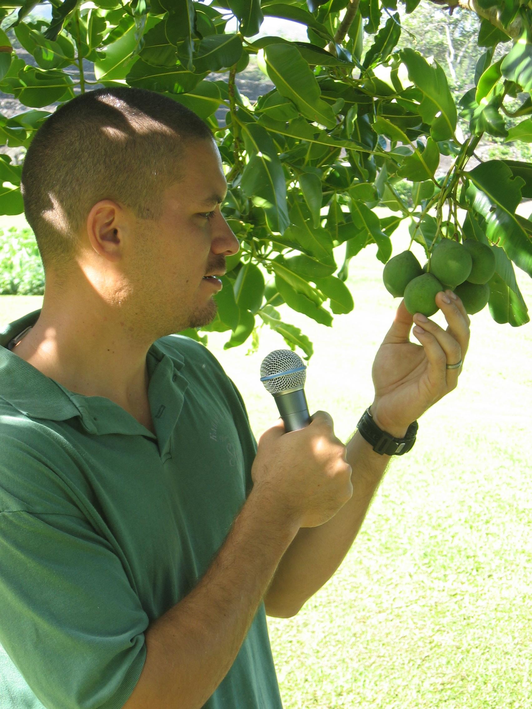 Calophyllum inophyllum   - Kamaui Aiona, Director of the Kahanu Garden of the NTBG speaking about Calophyllum inophyllum