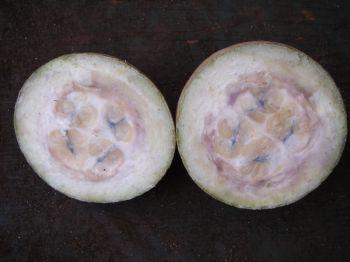 Genipa americana-果物は切り裂かれます - Genipa americana - Fruit dissected