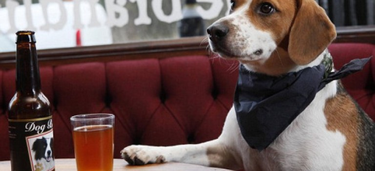 狗狗啤酒新上市:汪星人也能不醉不歸了!