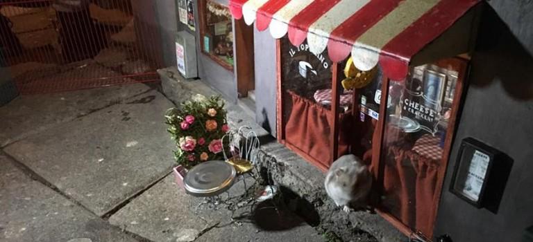 瑞典人突發奇想,在街角給老鼠開了一家迷你咖啡廳:萌爆表啦!