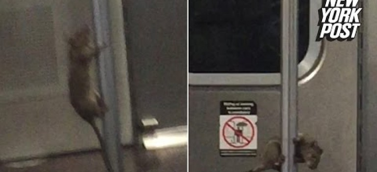 【視頻】紐約老鼠要成仙!地鐵車廂跳鋼管舞:旋轉、跳躍一氣呵成